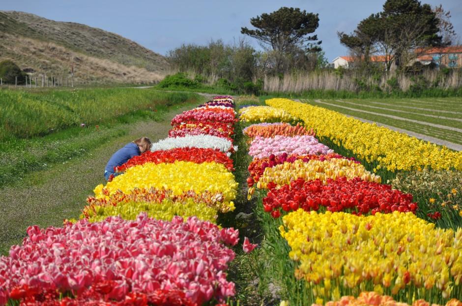 Abac Holland flower gardens
